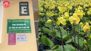 Lan hồ điệp tết 2018 được Điện hoa Việt Pháp trồng theo công nghệ mới.