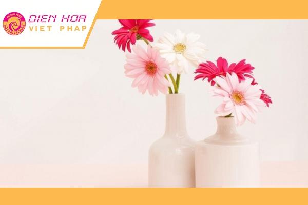 Cắm hoa đồng tiền cần phải lưu ý cách cắm để giữ hoa tươi lâu