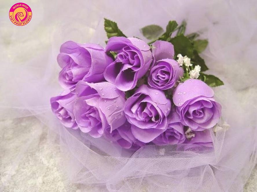 Hoa hồng tím cho những cô gái lãng mạn