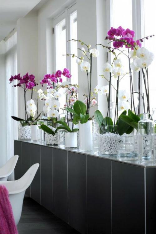 Cách cắm hoa lan Hồ Điệp mang may mắn tài lộc cho gia chủ