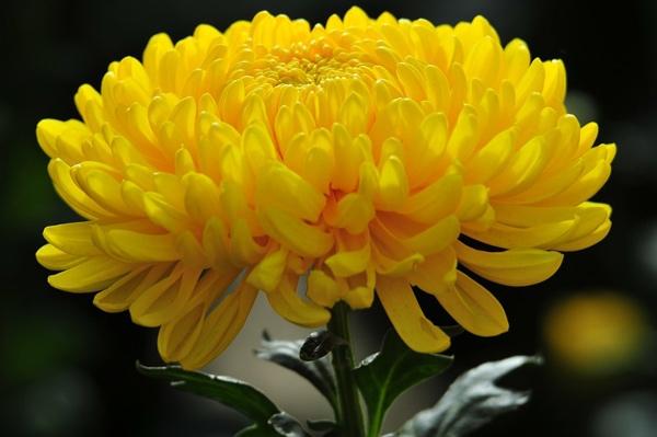 Xử lý hoa kho lạnh: Nên hay không nên?