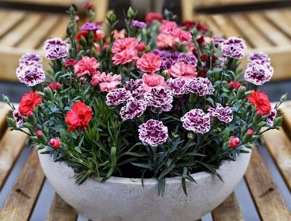 Có những loài hoa đẹp tinh khôi mang tên tháng Tư Hà Nội