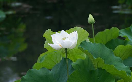 Có những loài hoa tuyệt đẹp gắn bó với đất nước và con người Việt Nam