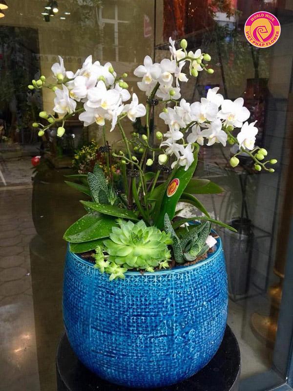 CEO Hoa Việt Pháp Ngô Thị Hồng An: Mong ước mọi người, mọi nhà đều được thưởng hoa