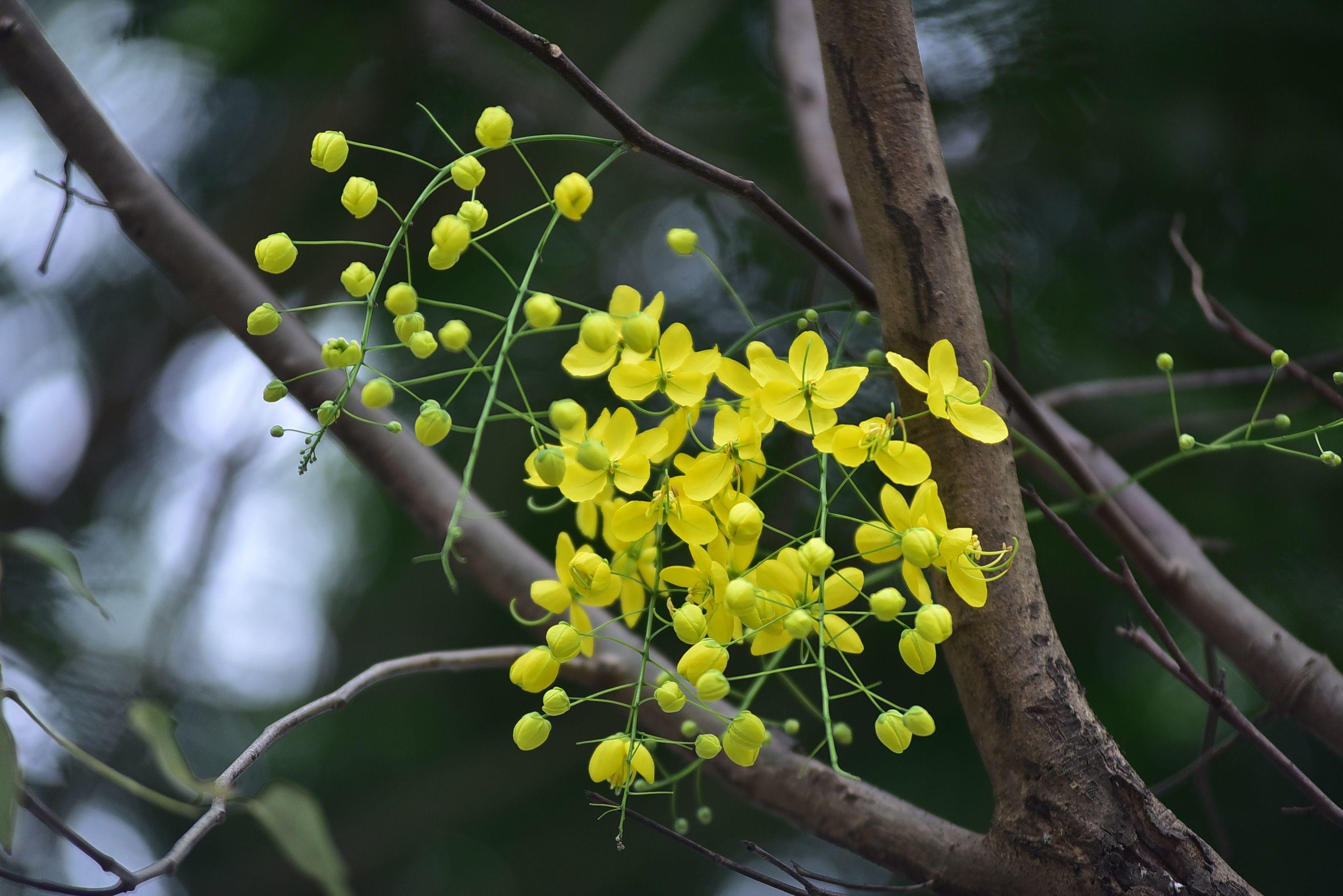 Những loài hoa tháng 6 rực rỡ gọi hè về giữa lòng thủ đô