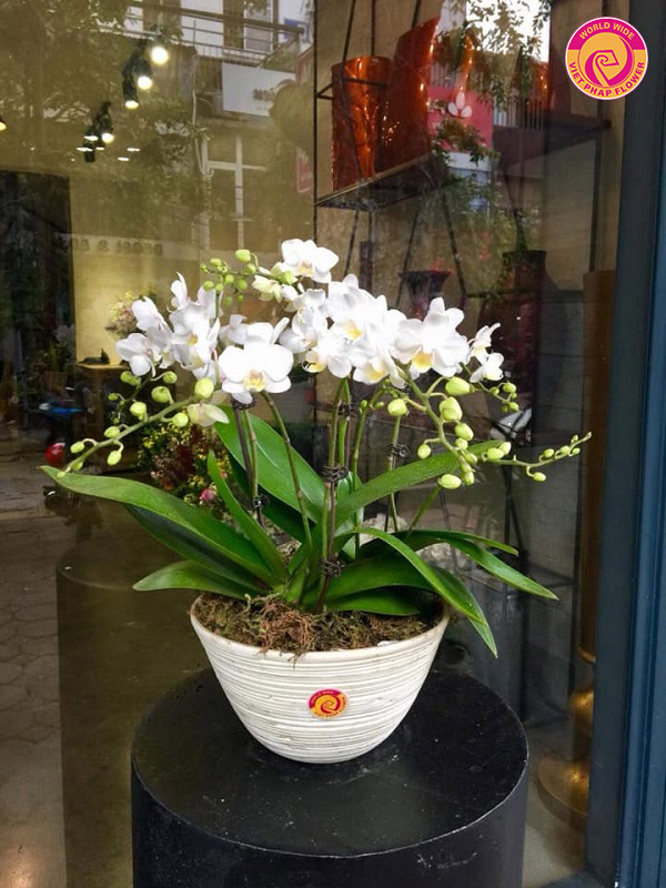 Điện hoa Việt Pháp - Nơi thỏa mãn tình yêu cái đẹp