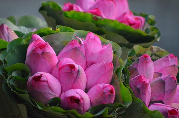 Vương vấn sắc hoa gọi thu về