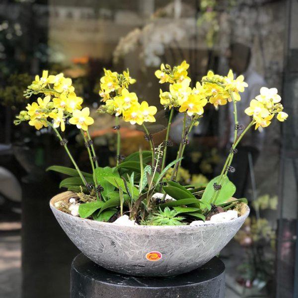 Bí quyết chăm sóc lan hồ điệp của dân chơi hoa