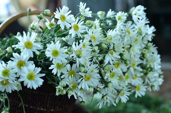 Những loài hoa khoe sắc thu Hà Nội