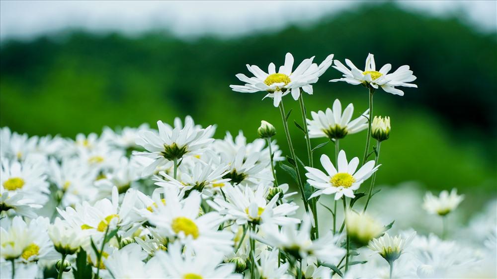Những loài hoa của đất trời chớm đầu đông
