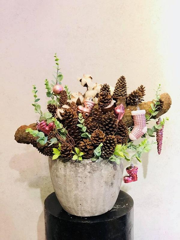 Những loài hoa tượng trưng cho mùa Giáng sinh an lành
