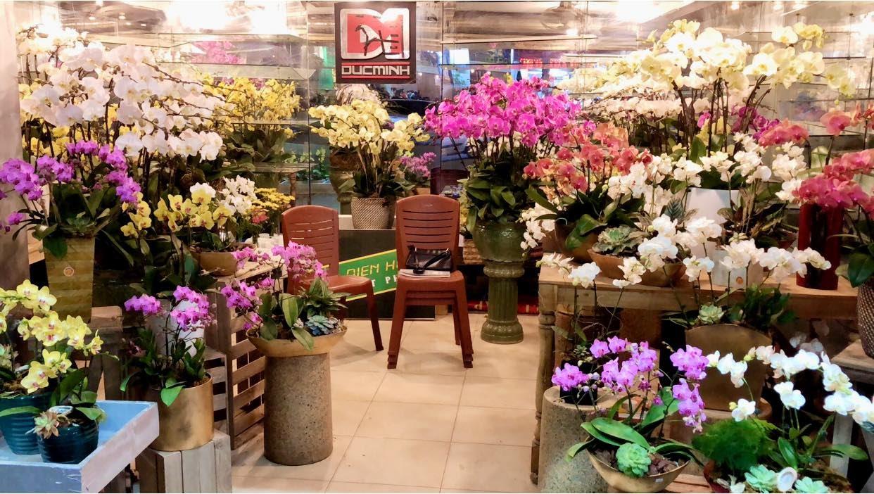 Lan hồ điệp Tết 2020 - Địa chỉ mua lan sang, sành, nghệ thuật tại Hà Nội