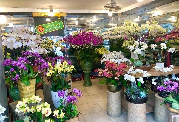 Cận cảnh mẫu hoa lan hồ điệp sang - đẹp đã có mặt tại Hoa Việt Pháp