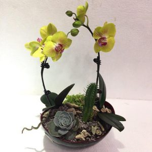 hoa lan hồ điệo flower orchid
