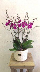 hoa lan hồ điệp flower orchid