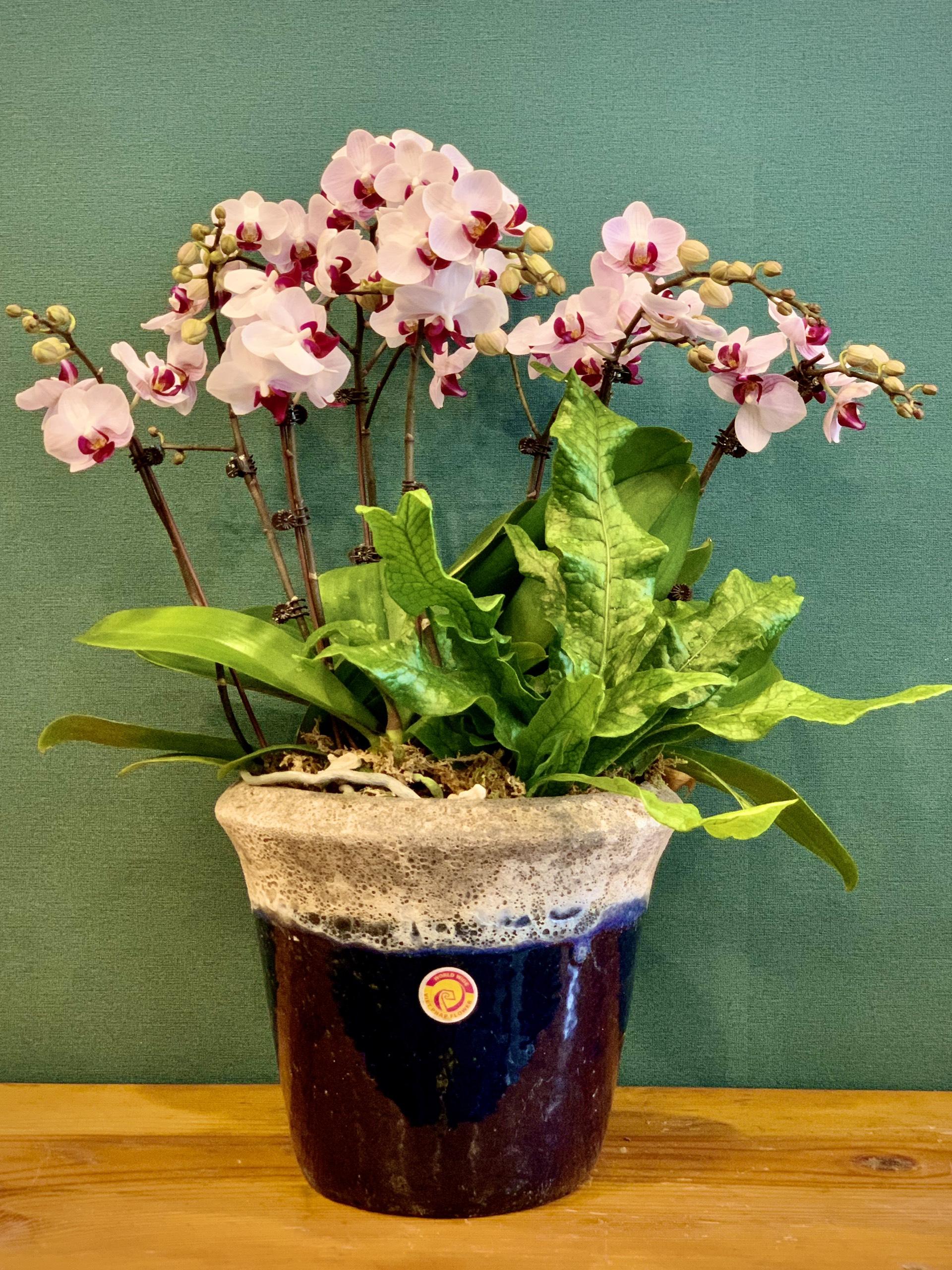 hoa lan hồ điệp flower chid
