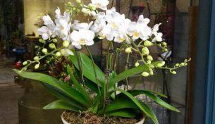 Điện hoa Việt Pháp – Nơi thỏa mãn tình yêu cái đẹp