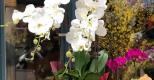 Top 5 loại hoa được yêu thích nhất trong dịp Tết Nguyên đán