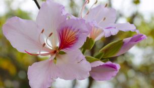 Những loài hoa khoe sắc cuối xuân Hà Nội