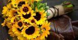 3 loài hoa phù hợp tặng trong ngày nhà báo
