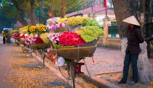 Các loài hoa xinh đẹp đua nhau khoe sắc những ngày Hà Nội chớm thu