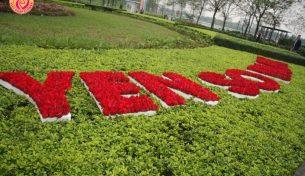 Điện hoa Pháp làm thảm hoa chào mừng lễ khai trương dự án Gamuda và công viên Yên Sở