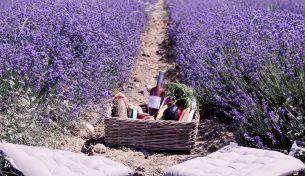 Du lịch quanh thế giới ngắm các loài hoa tháng 6 tuyệt đẹp