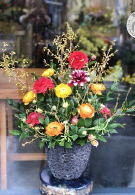Hoa nghênh xuân mẫu 2
