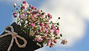 Điều gì khiến hoa tươi luôn có sức hút rất lớn với mọi người?