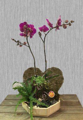 Valentine Hồ Điệp 01