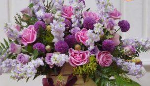 Nên tặng hoa gì trong ngày nhà báo?