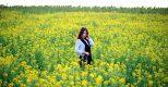 Những địa điểm check in hoa cải vàng nở rộ đầu đông Hà Nội