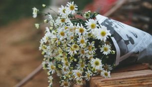 Những sắc hoa tháng 11 rực rỡ trong gió đông