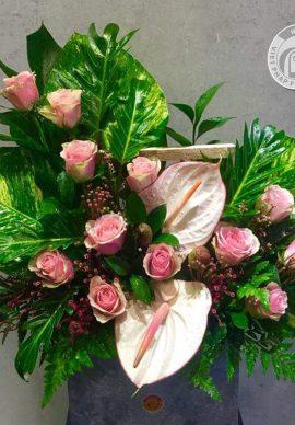 Hồng Rose Bella VP0907800