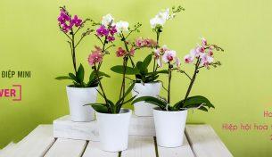 Việt Pháp Flower giảm 30% nhân kỷ niệm ngày gia nhập Hiệp hội Interflora