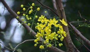 Vương vấn những sắc hoa cuối hè